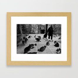 Some cats in Istanbul Framed Art Print