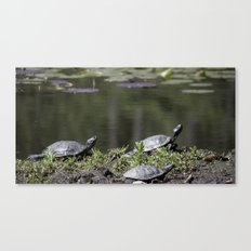 Family of Turtles Canvas Print