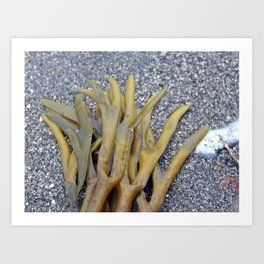 Kelp Bladders Art Print