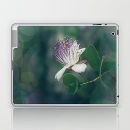 Caper flower Laptop & iPad Skin