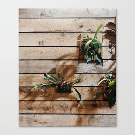 Staghorn wall Canvas Print