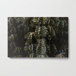 Botanical garden - Green cactus - Lanzarote, Canary island (Garden Cactus) - Fine art travel photography  Metal Print