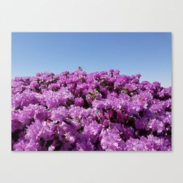 """View of """"Mount Rhodendron"""" on a clear day Canvas Print"""