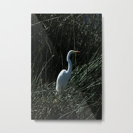 Great White Heron in Reeds Metal Print