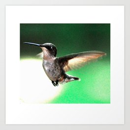 Hummingbird Hovering Art Print