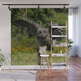 Baby Great Gray Owl Wall Mural