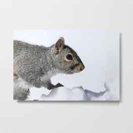 Snow Squirrel Metal Print