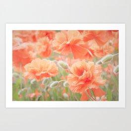 Enchanting Poppies Art Print