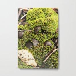 Stills-moss Metal Print