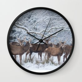 Red deers  from wintry Killarney National Park Wall Clock