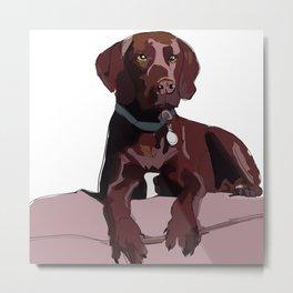 Labrador dog (chocolate) Metal Print
