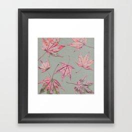 Japanese maple leaves - apricot on light khaki green Framed Art Print