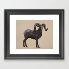 The Rocky Mountain Bighorn Sheep Framed Art Print