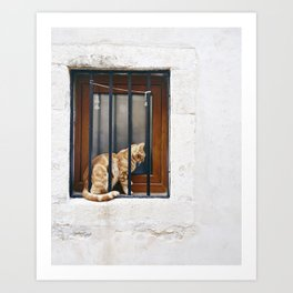 Contemplative Cat Art Print