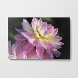 Frosted Dahlia named Sandia Melody Metal Print