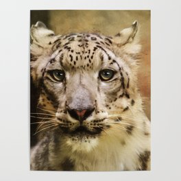 Hope For Tomorrow - Snow Leopard Art Poster