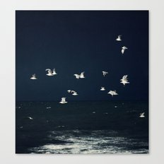 sea - evening flight Canvas Print