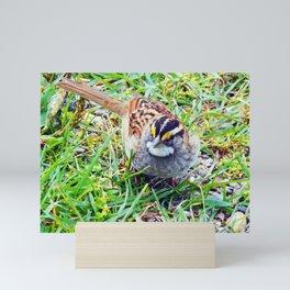 Sparrow Mini Art Print