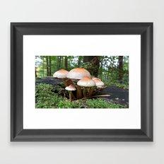 MM - Mushrooms Framed Art Print
