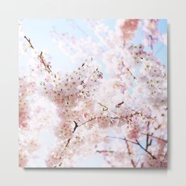 Soft Pink and White #pinkflower Metal Print