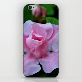 Raindrops On Pink Rose iPhone Skin