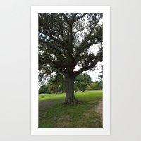 The Mossy Tree Art Print