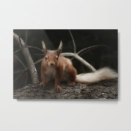 Cheeky red squirrel Metal Print