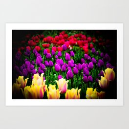 Tulip Festival in Woodburn, Oregon, 6 Art Print