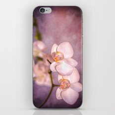 the white orchid - violet texture iPhone & iPod Skin