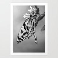 Flutter IV Art Print