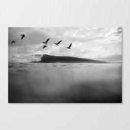 Pelícano Canvas Print