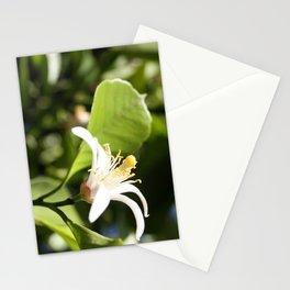 Lemon flower Stationery Cards