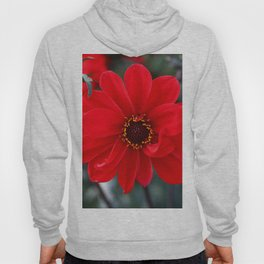 Red Red Dahlia Hoody