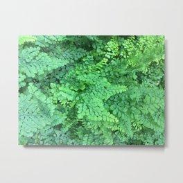 Maidenhair Ferns Metal Print