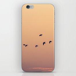 Pájaros iPhone Skin