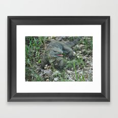 Cayman Iguana Framed Art Print