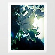 Sky Blossom Art Print