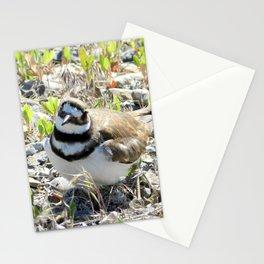 Confused Killdeer Stationery Cards