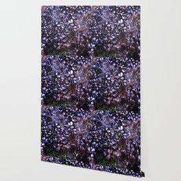 Sea Shells Wallpaper