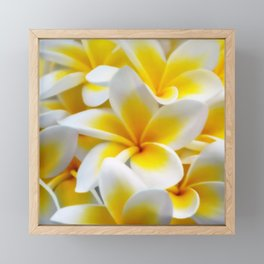 Frangipani halo of flowers Framed Mini Art Print