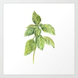The Basil Plant Art Print