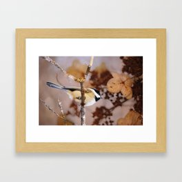 Birds :: Winter Chickadee Framed Art Print