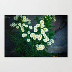 pufff Canvas Print
