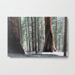 Sequoia Underworld Metal Print