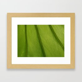 Green Leaf Texture 05 Framed Art Print