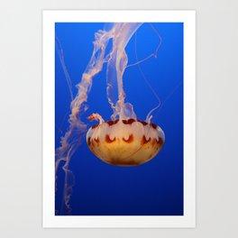 Medusa Jelly Art Print
