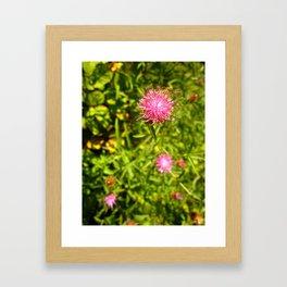 Prickly Fuchsia  Framed Art Print