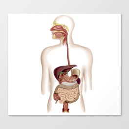 Anatomy of human digestive system. Canvas Print