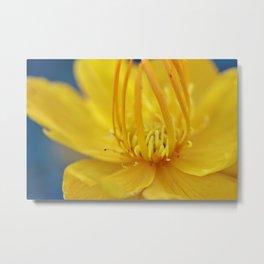 Yellow flower blue sky Metal Print