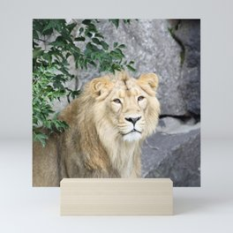 Lion 619-1 Mini Art Print